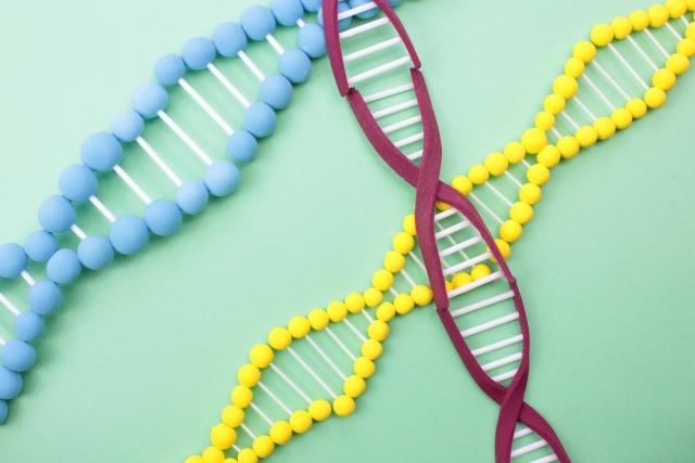 葉酸と細胞分裂